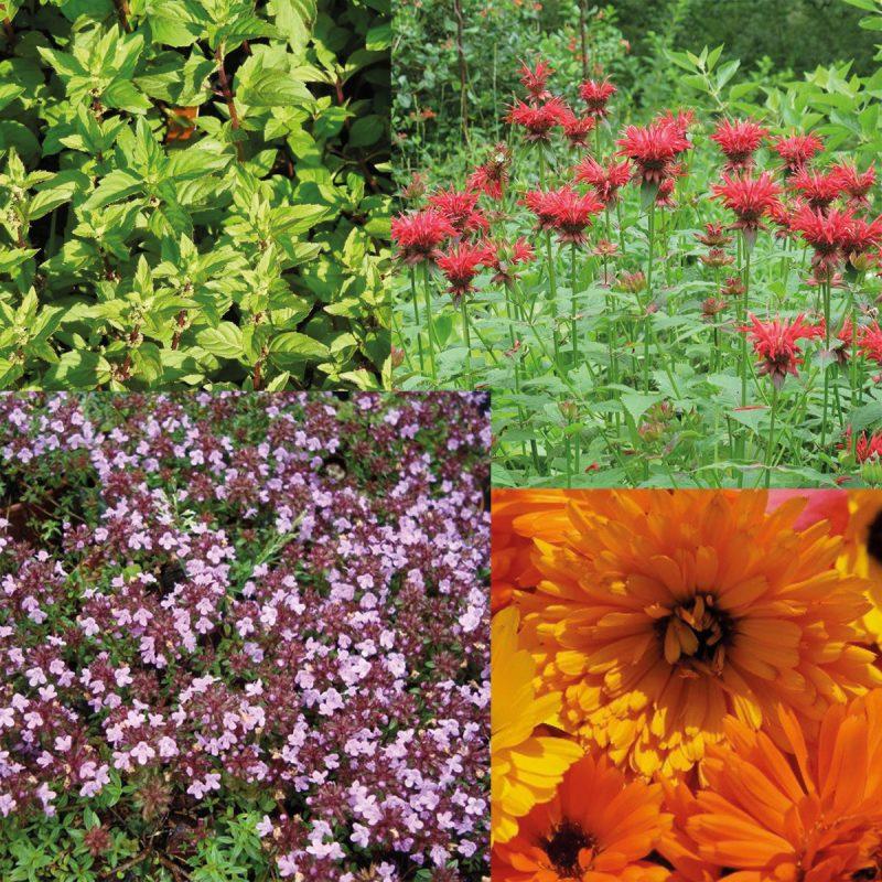 Würz- und Heilpflanzen